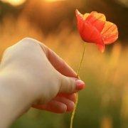 真正的爱情不是山盟海誓,把心交